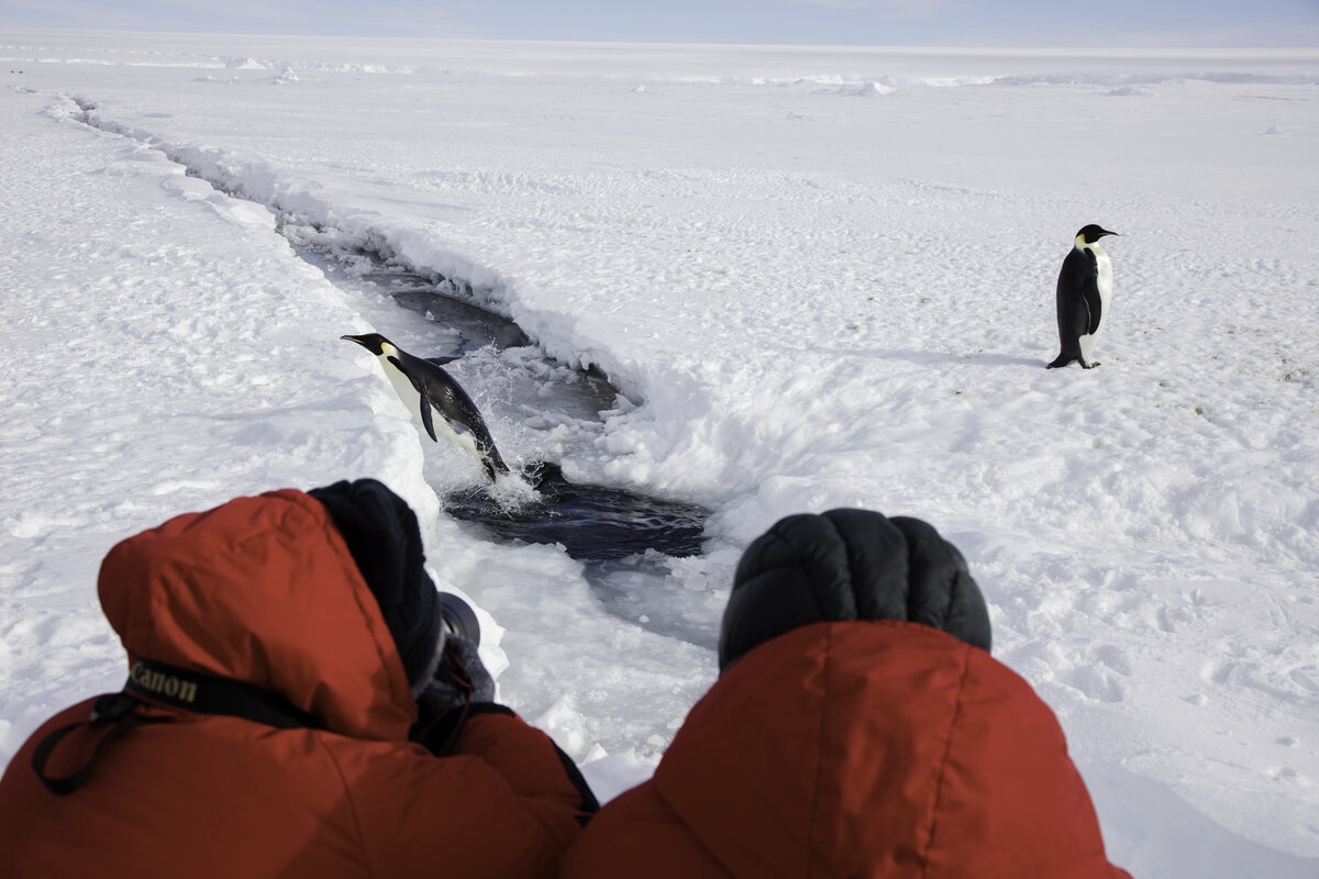 Guests photograph an emperor penguin leaping from the water