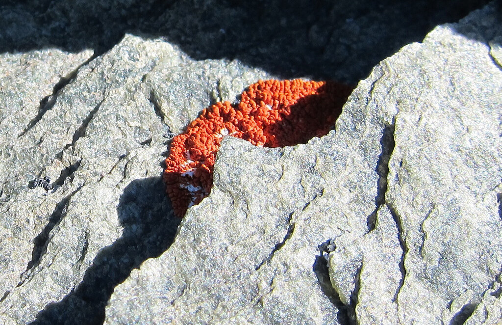 Orange lichen on Mount Sutton