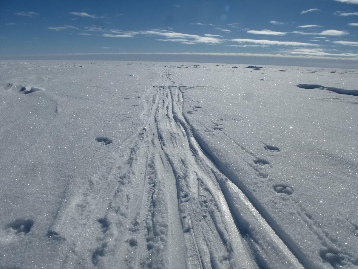 Ski tracks disappear into the distance across the polar plateau